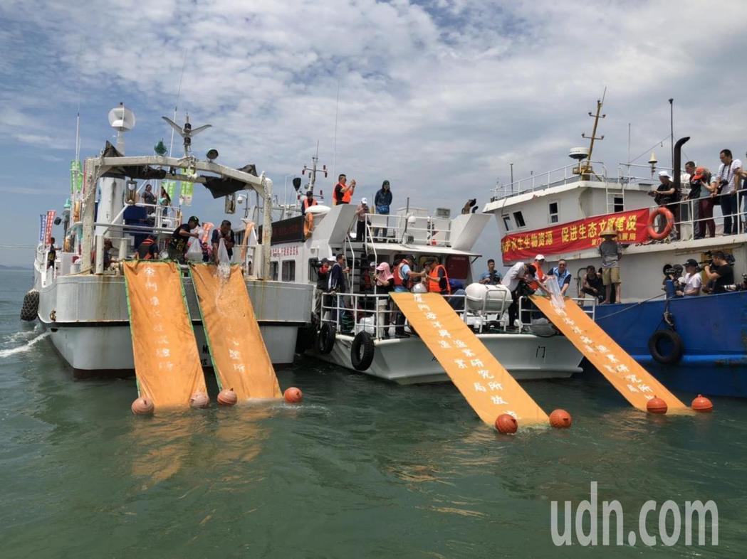 兩岸漁政單位今日攜手在小金門檳榔嶼附近海域進行放流,總計共同流放632萬餘尾魚苗...