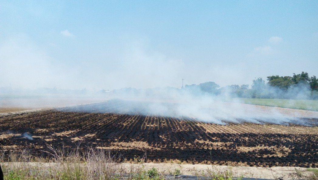 經研究,霑天燃燒稻草溫度高,破壞土壤結構,使土質變硬,並製造空汙,百害無一利。記...