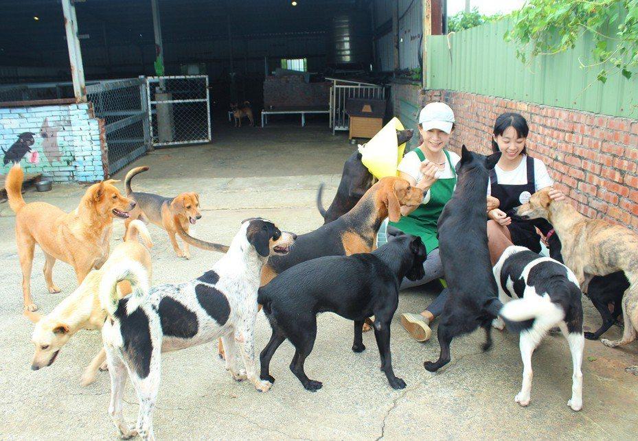 陳淑娟與女兒黃怡蓓成立幸福狗園,10多年來完成900隻犬隻救援安置、600隻犬隻送養,目前共照護約300隻貓犬,每年需花費860萬。圖/黃怡蓓提供