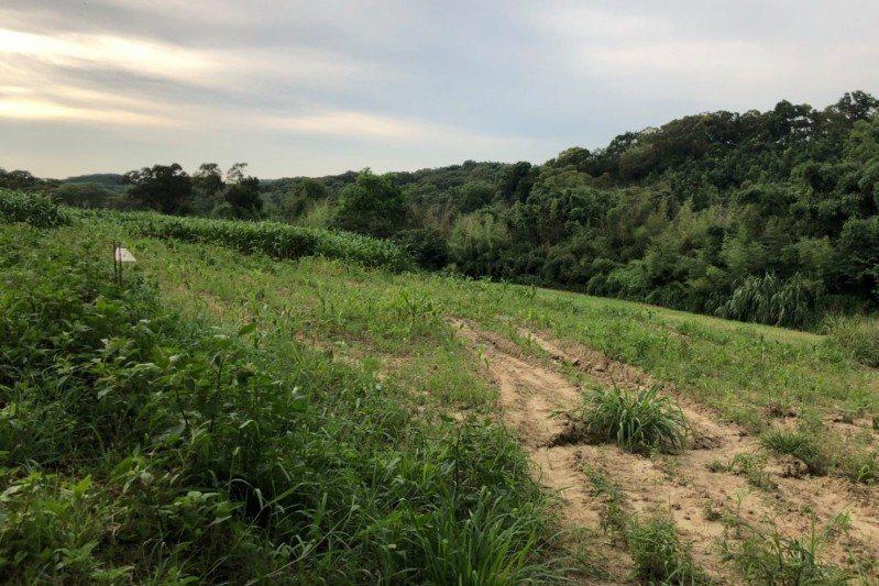 許多玉米被小面積栽培在私有地中,可能增加有害生物偵測的困難。 圖/行政院農委會動...