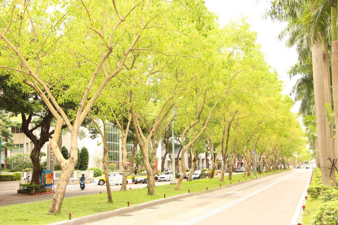 菩提樹屬於常綠大喬木,終年不凋,但在台灣由於氣候關係,常有落葉,新葉生長過程中不...