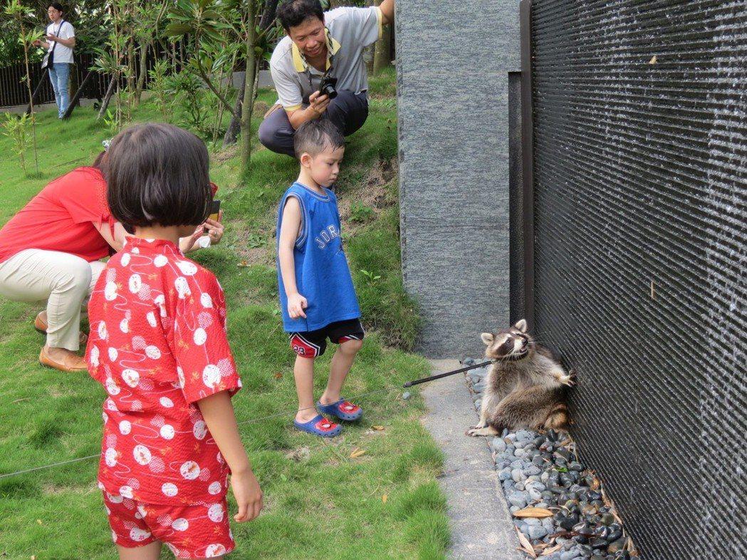 萌浣熊想住下不走了,可愛的萌樣吸引參加的小朋友目光。