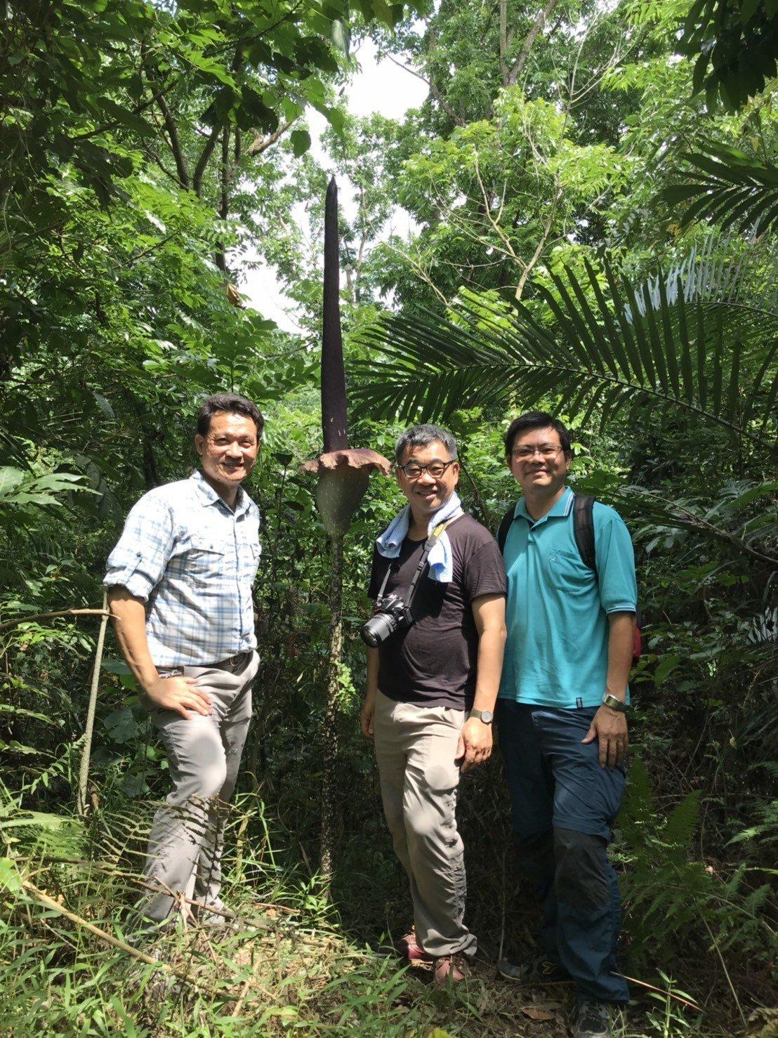 新化林場場長吳佾鴻(左)發現超過260公分的密毛魔芋,大開眼界。圖/吳佾鴻提供