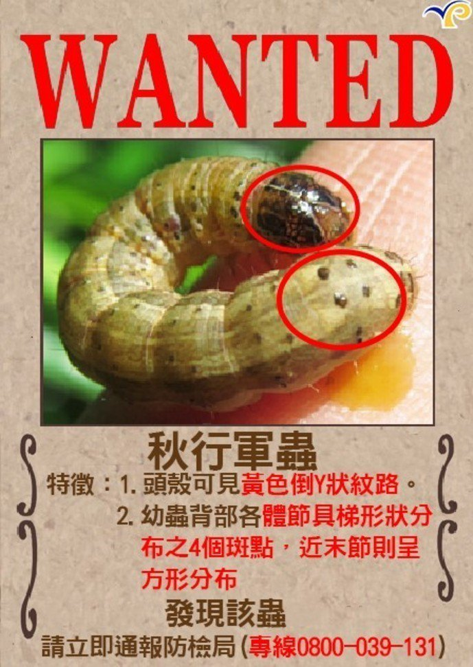 繼苗栗、嘉義後,雲林縣也傳出疑似秋行軍蟲的蹤影,縣府動植物防疫所今天接獲二位農民...