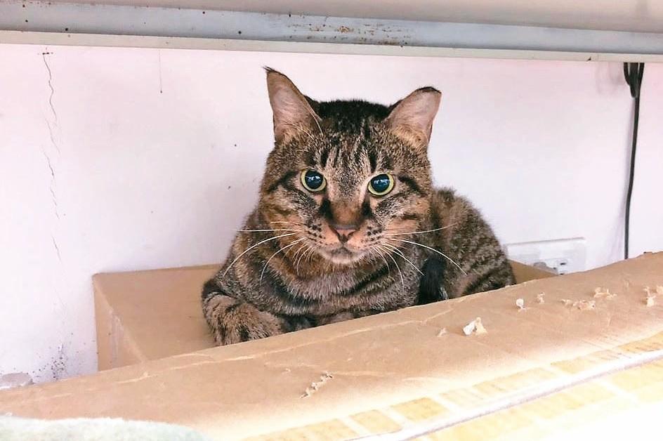 貓愛滋對人無害 「歐米」傷癒展開新生