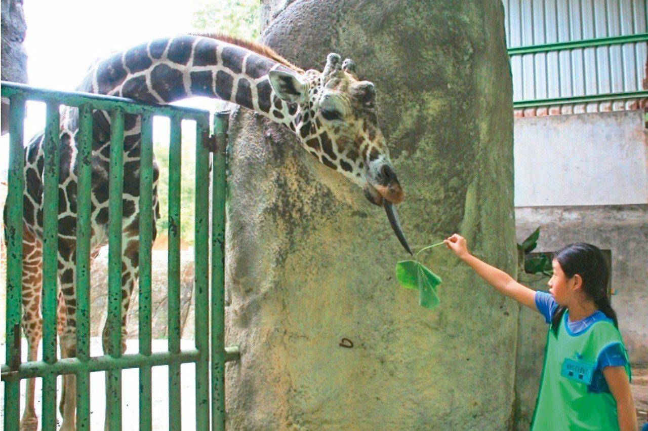 北市動物園19日至28日將閉園10天。 圖/北市動物園提供