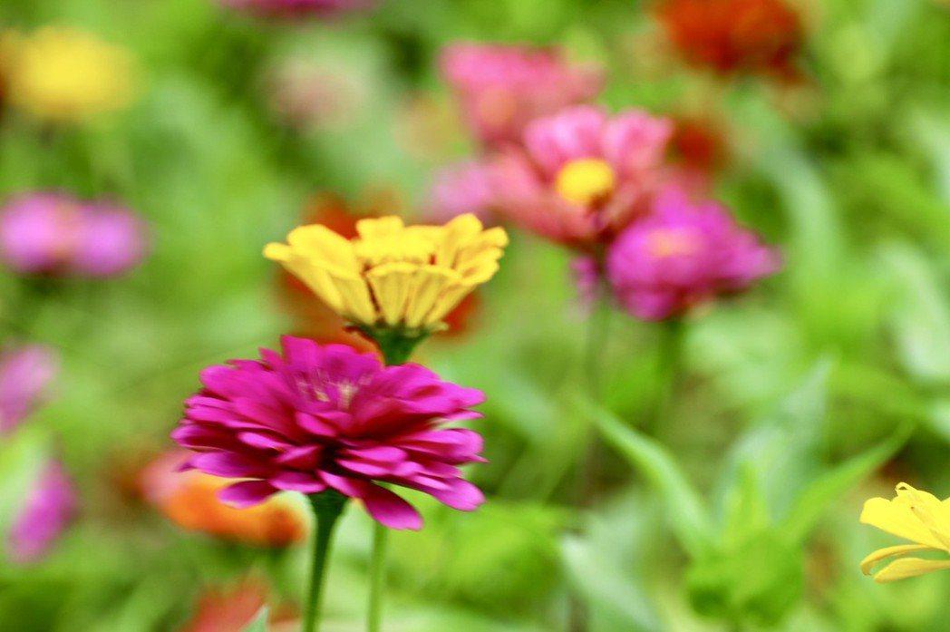 警務佐陳文瑞拍攝的自然花草,令人驚豔。 圖/陳文瑞提供