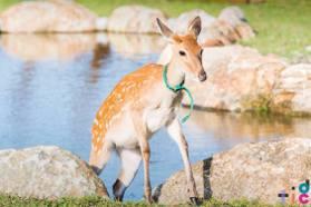 台灣也有超萌小鹿!全台5處「梅花鹿樂園」萌萌系景點推薦