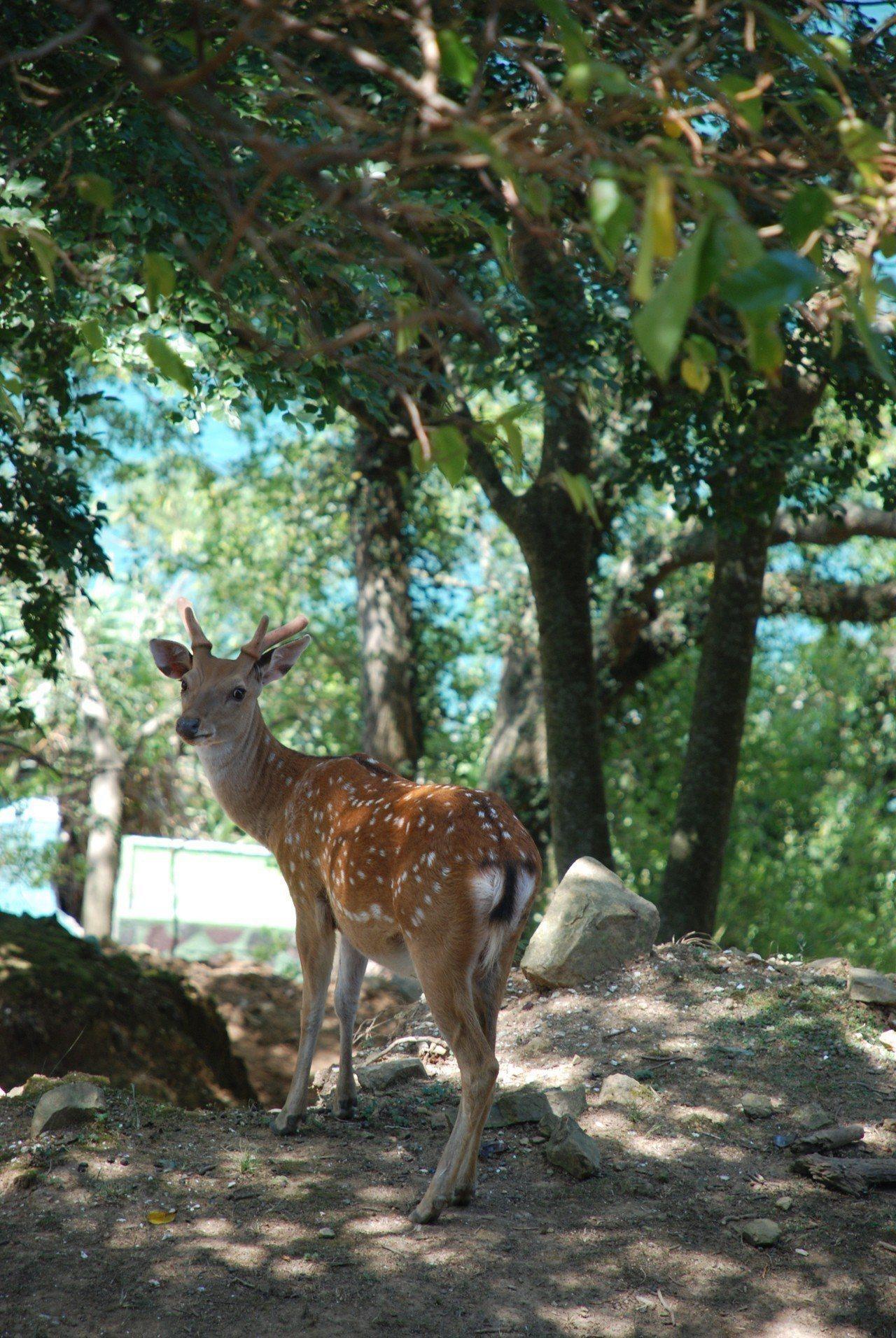 圖/大坵島擁有豐富的植物生態,海蝕地形,以及擁有超萌梅花鹿的大坵生態樂園。擷取自...