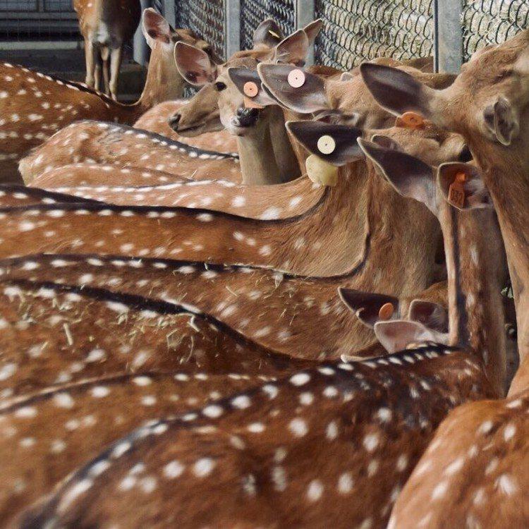 圖/擷取自鹿境 Paradise Of Deer