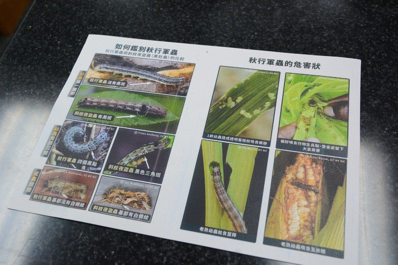 秋行軍蟲容易寄生的作物種類高達353種,其中主要為害科別為禾本科,包括國內常見的...