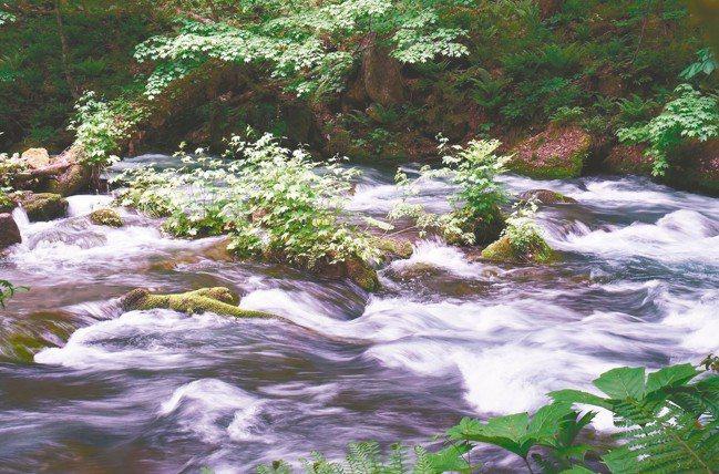 奧入瀨溪流銀白的水花與沿途樹林交織的美景,是日本青森旅遊一大賣點。 圖/陳志光、...
