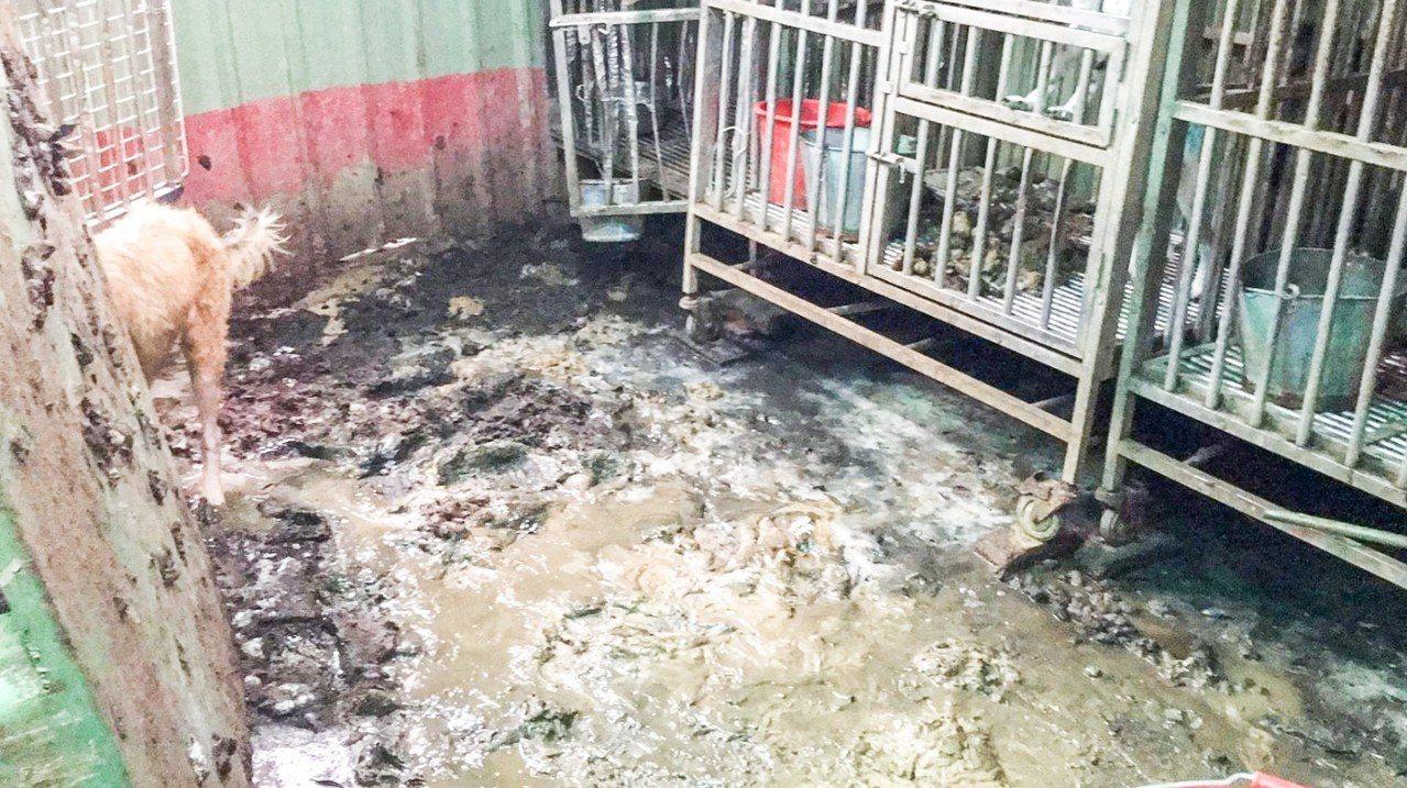 71歲陳姓女子在鐵皮屋內飼養約207隻犬貓,卻因疏於照顧,導致30隻犬隻死亡,被...