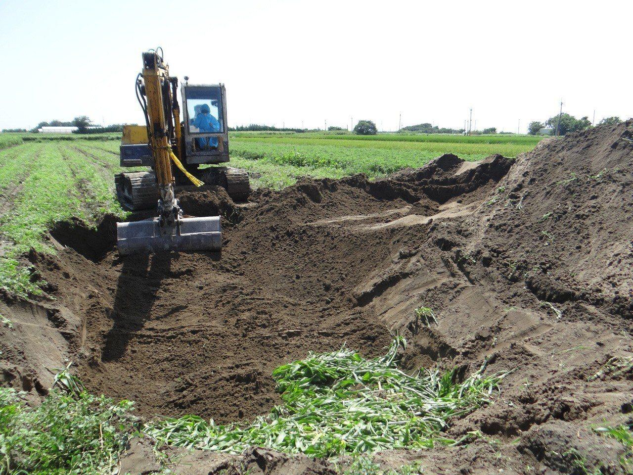 挖土機挖深三公尺把感染秋行軍蟲的玉米全都就地掩埋。記者蔡維斌/攝影