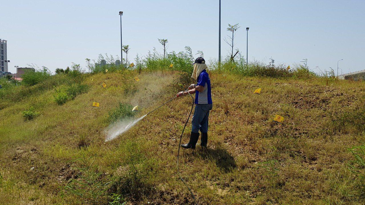 大水淹不死紅火蟻恐蔓延 桃竹苗提案籲中央增防治經費