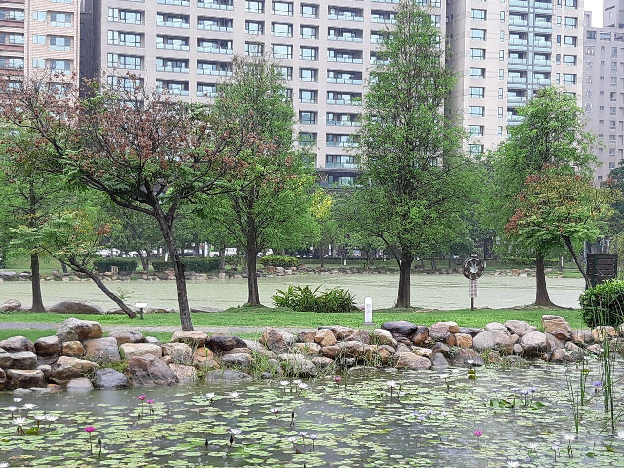 凹子底森林公園生態濕地以栽植蓮花等水生植物淨化水源。記者謝梅芬/翻攝