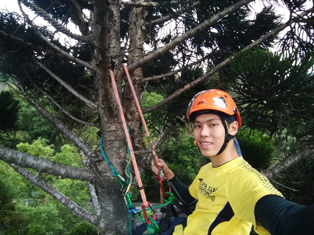 梁鎮州於新北市泰山辭修公園獨攀20米南洋杉。圖/教育部提供