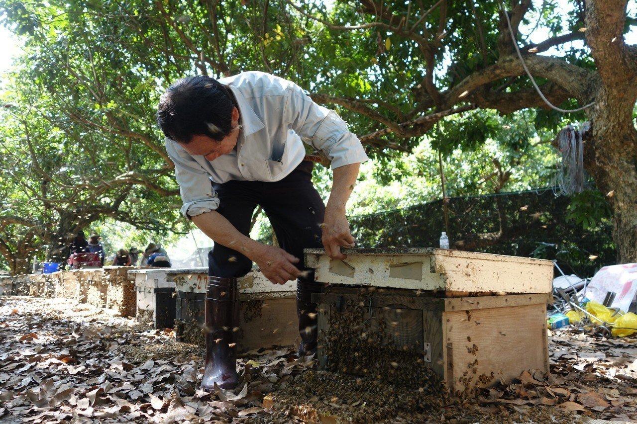 南投中寮盛產龍眼蜜 蜂農籲辦評鑑顧品質促產銷