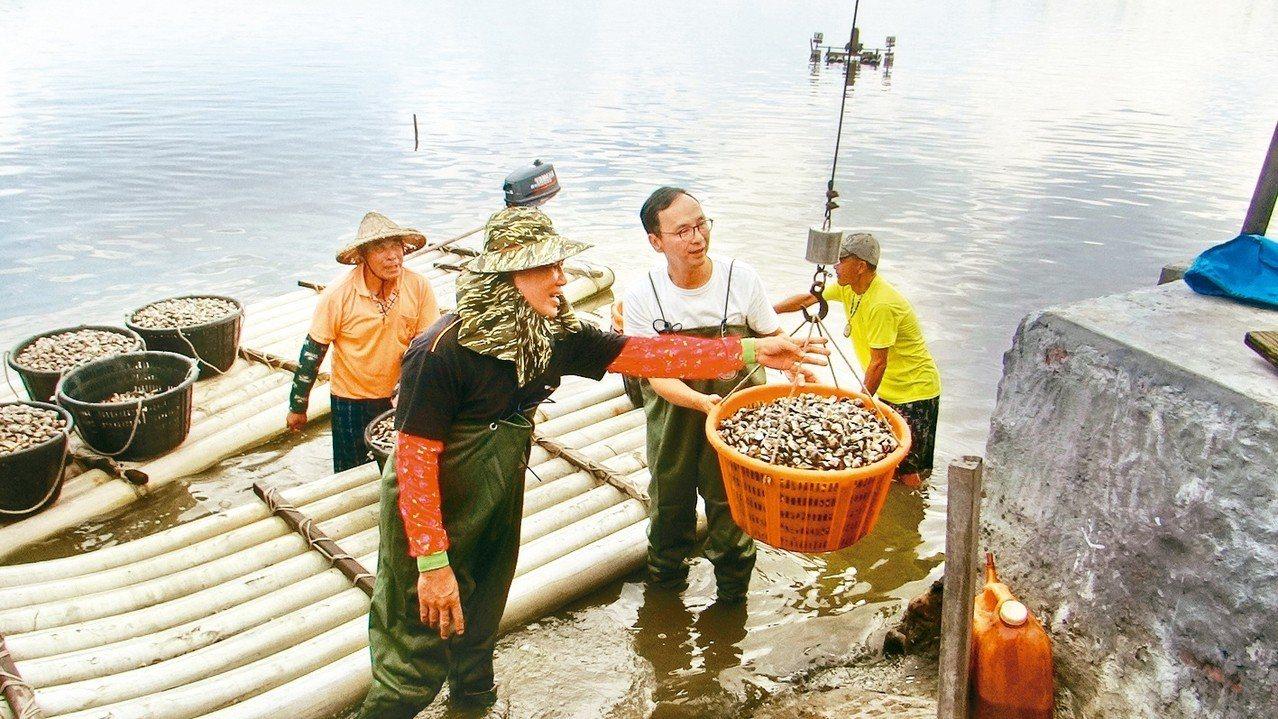 朱立倫穿著青蛙裝體驗魚塭採收的辛苦。 記者蔡維斌/攝影