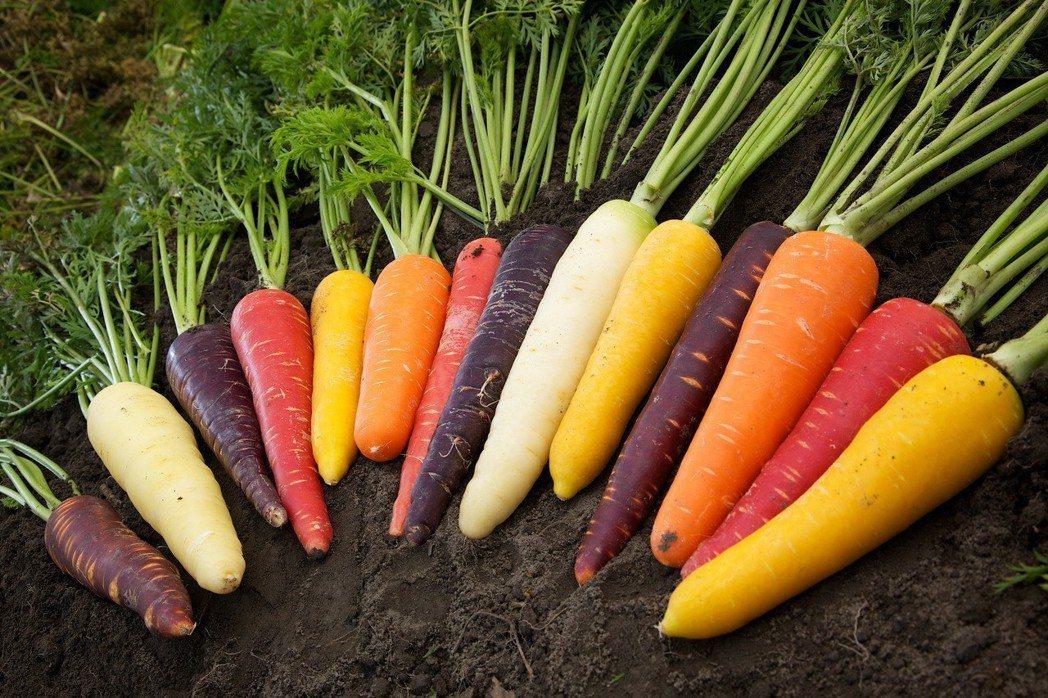 VDS活力東勢契作胡蘿蔔,產地橫跨彰化、雲林及台南等三縣市,堅持胡蘿蔔必須符合安...