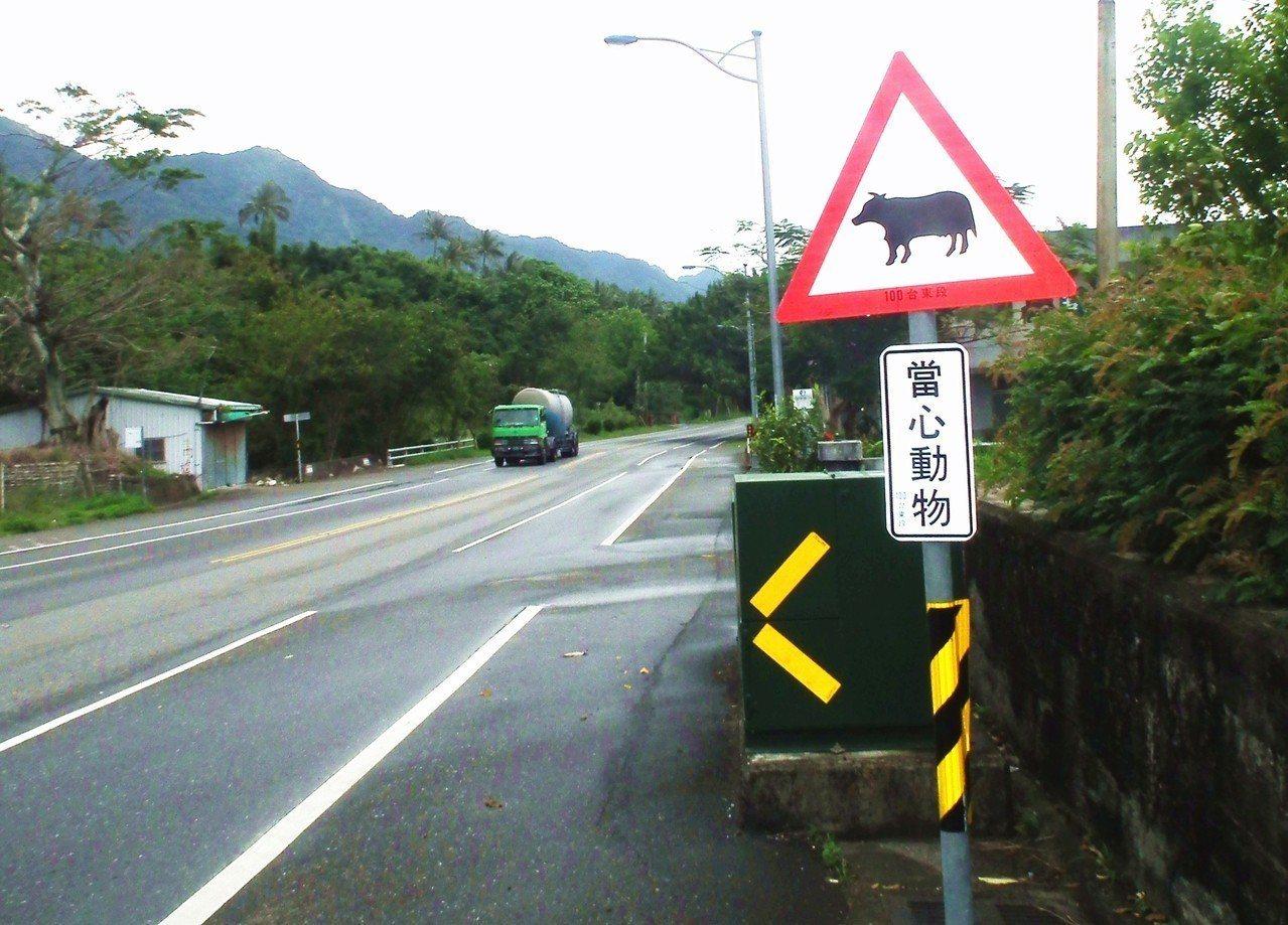 省道台11線常見牛隻在公路上逛大街,屢屢發生汽機車撞牛事故,路政單位為此豎立「當...