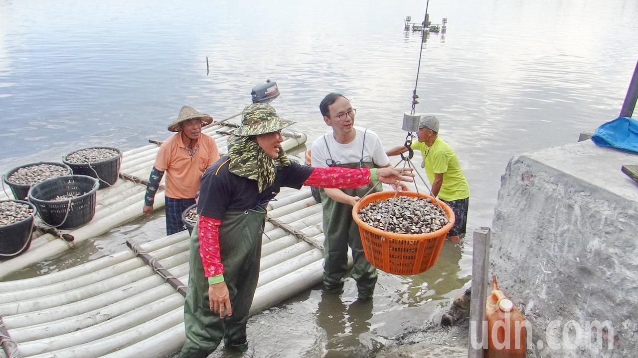 朱立倫穿著青蛙穿體驗魚塭採收的辛苦。記者蔡維斌/攝影
