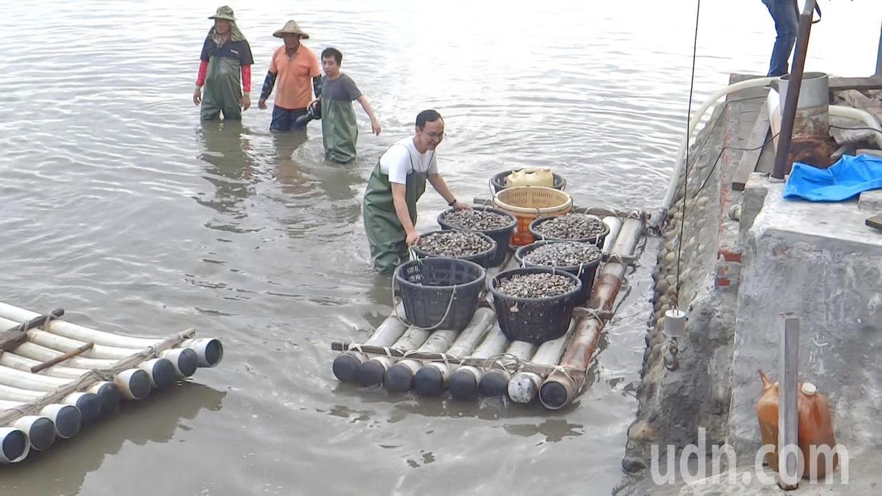 朱立倫快樂地把所採的滿筏文蛤送上岸。記者蔡維斌/攝影