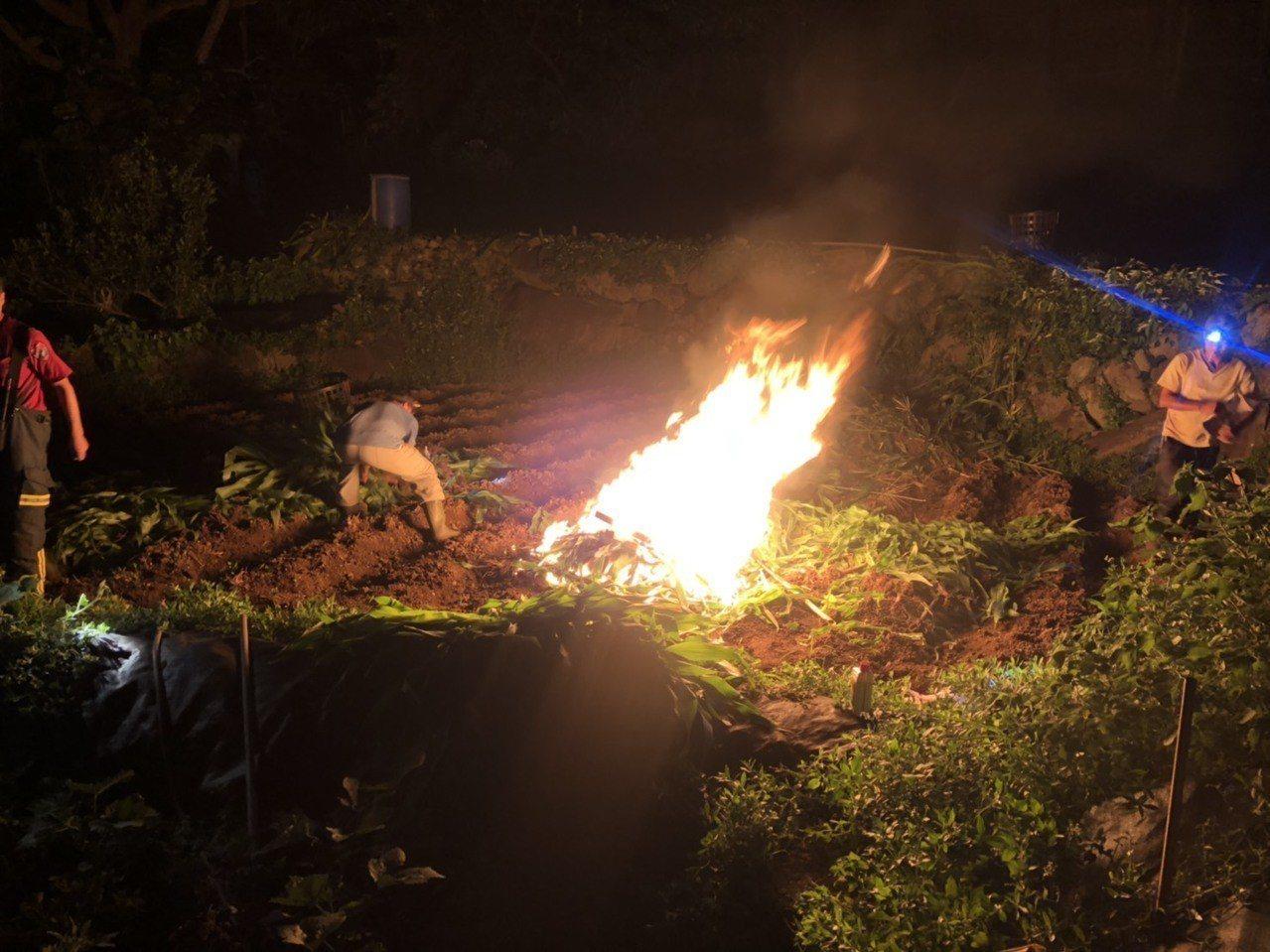 秋行軍蟲入侵台灣,北市上周於士林北投地區發現2疑似案例,分別在15日晚上、16日...