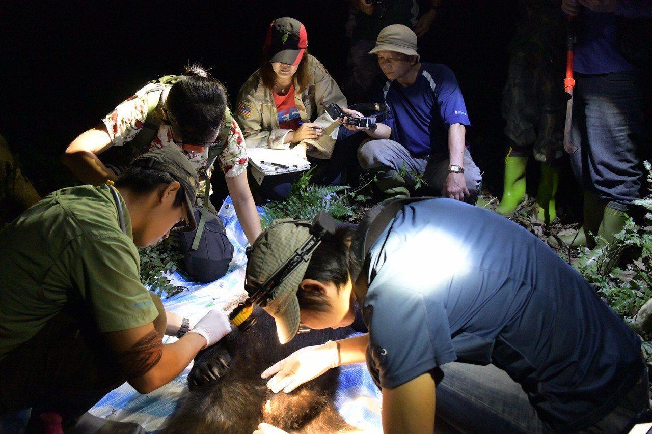 花蓮林管處及台灣黑熊保育協會等人到山上救援。圖/花蓮林管處提供