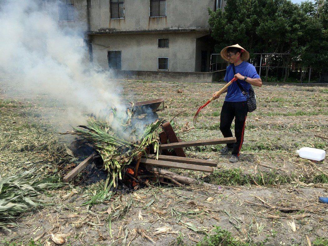 台中市清水區秋行軍蟲確診玉米田焚毀。圖/台中市農業局提供