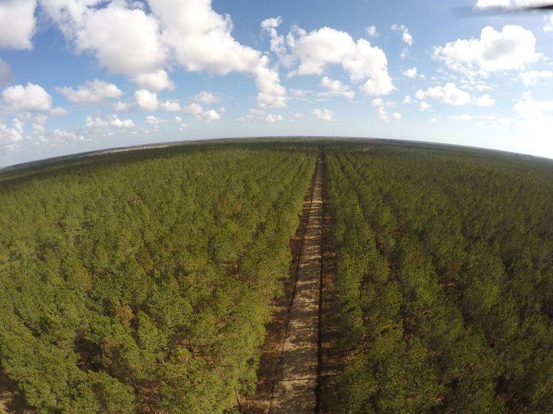 美國銀行幫有錢人找具投資利益的森林資產。美國銀行提供