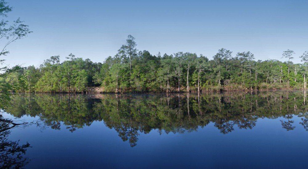 投資森林可能要很多年之後才能獲得投資回報。美國銀行提供