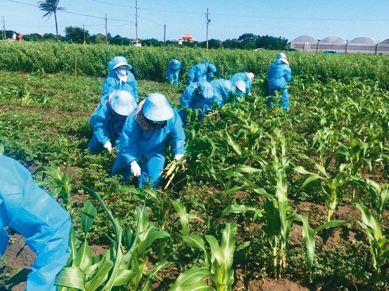 各縣市展開除蟲大作戰。 圖/雲林縣動植物防疫所提供