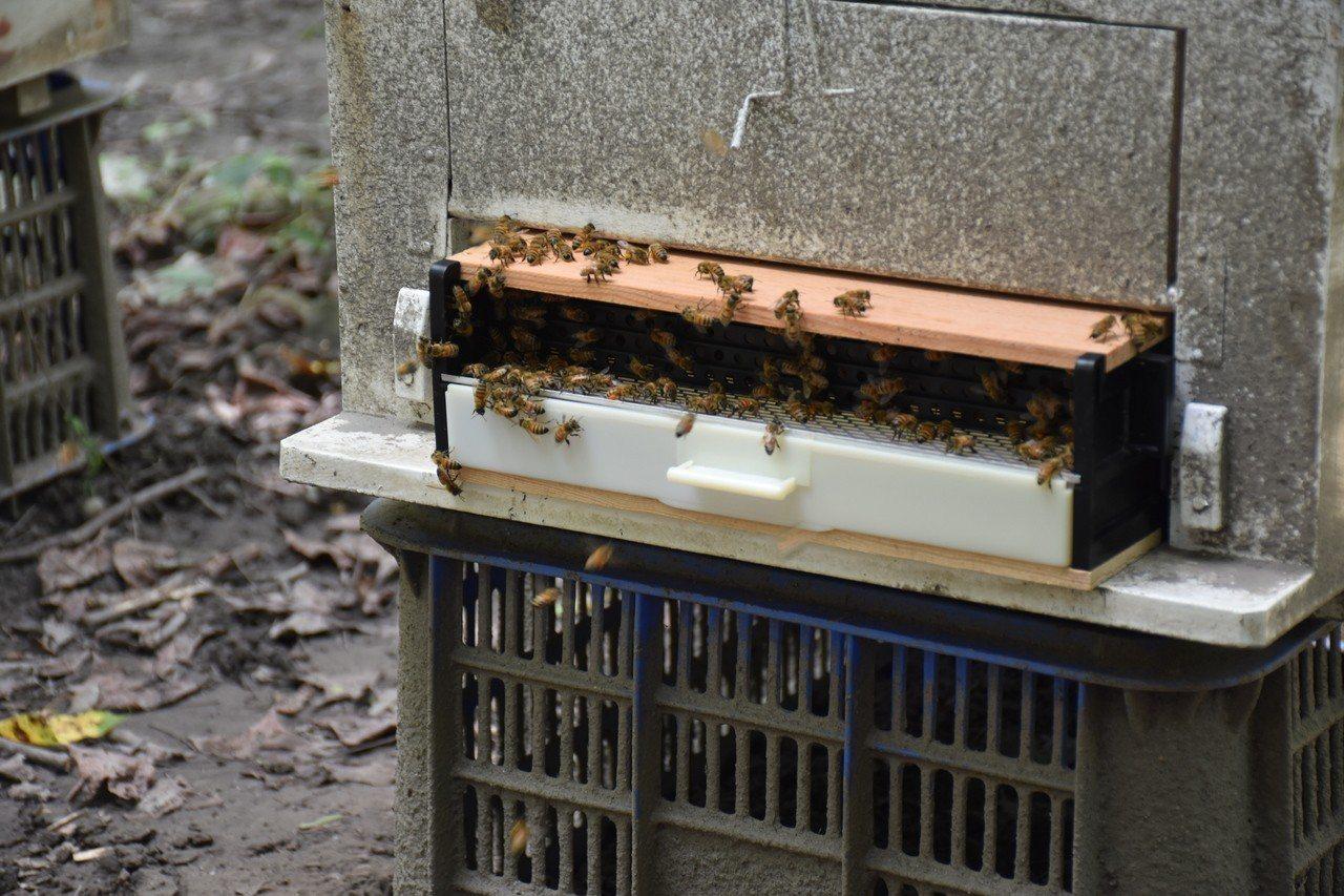 影/林下經濟正夯 居民種菇養蜂拚經濟