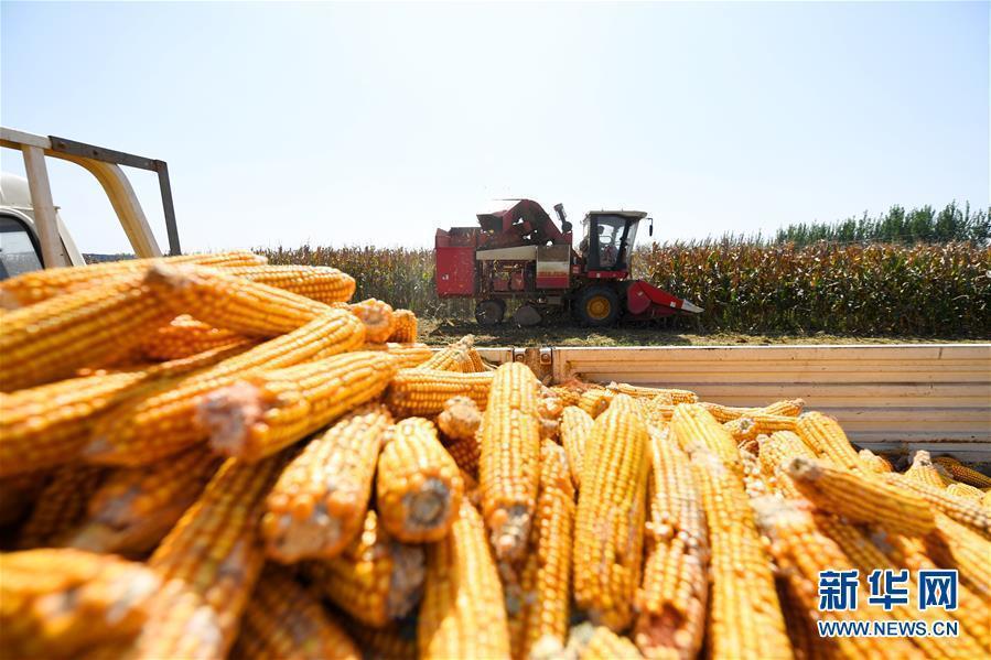 大陸商務部19日表示,決定繼續維持對原產於美國的進口乾玉米酒糟的反傾銷和反補貼措...