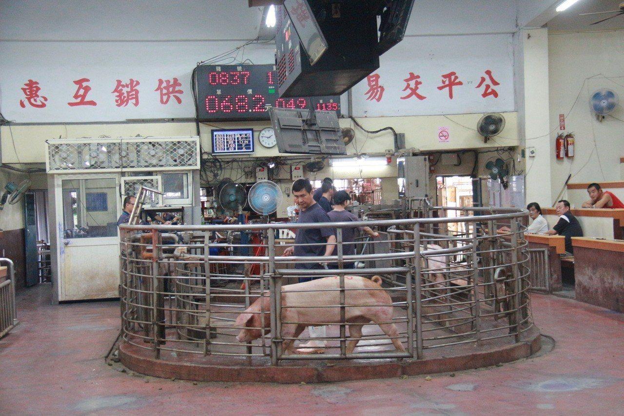 彰化肉品市場最近平日拍賣頭數約1600頭,比往年減短2、300頭。記者林敬家/攝...