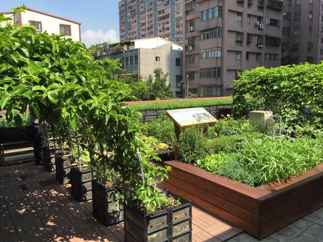 新北市三重某社區的綠屋頂。 圖/新北市農業局提供
