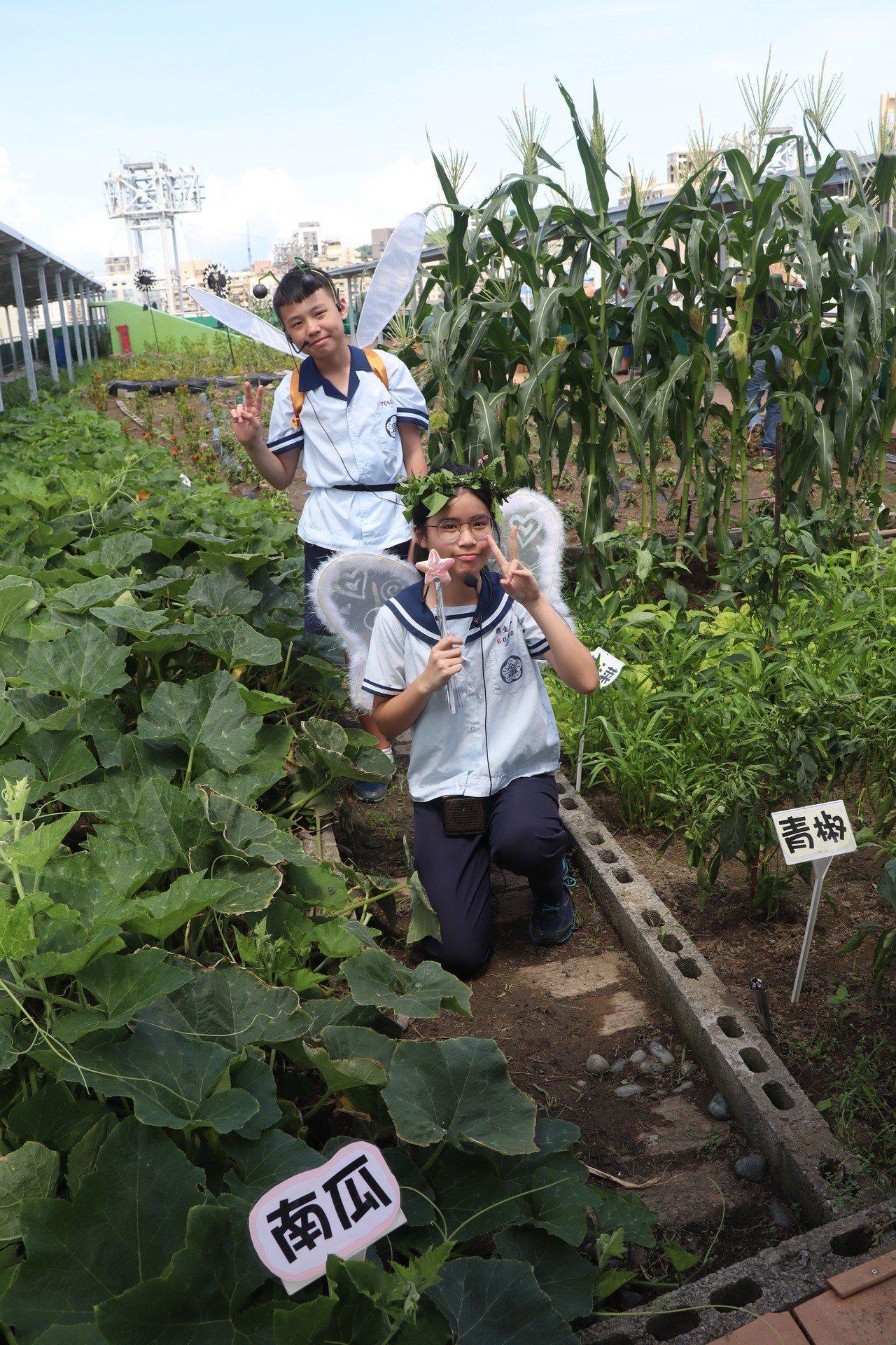 前金國中校園有豐富的綠色生態,種了許多花果蔬菜。記者徐如宜/攝影