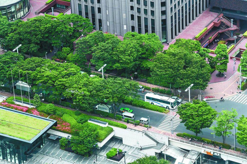 東京都廳正透過修剪行道樹擴大樹蔭,改善2020奧運馬拉松賽沿途高溫難耐的問題。 ...