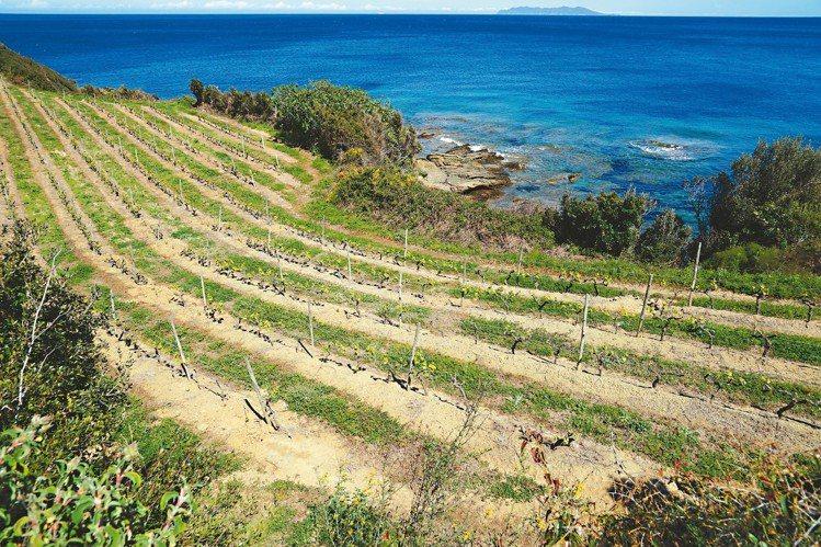科西嘉島是全球最精彩的Vermentino白酒產區,不只清爽,且帶著迷人的海水滋...