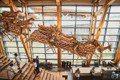 台灣第一座化石博物館!台南「左鎮化石園區」空中奔馳的梅花鹿群超美