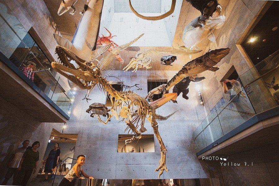 圖/園區累計收藏像是猛獁象、劍齒象、古鹿、鱷魚、海相、陸相生物等化石,加上鎮館之...