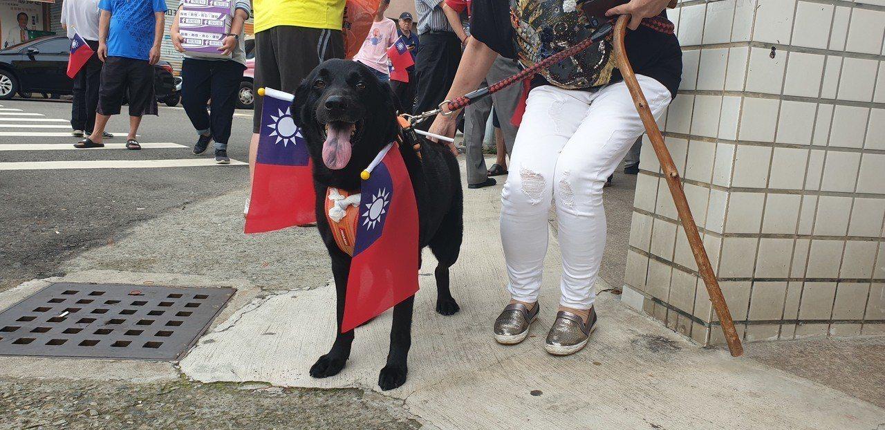 黑狗也帶國旗到場。記者游振昇/攝影
