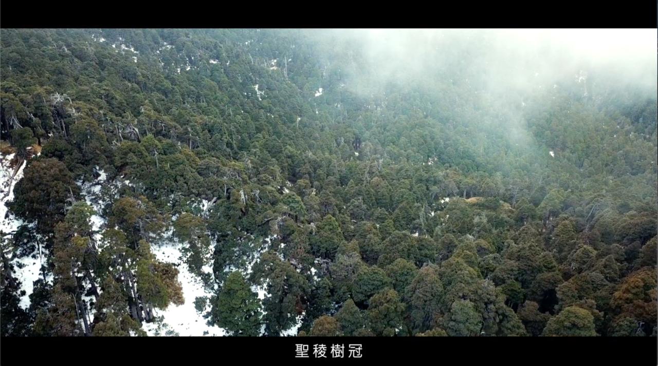 「聖稜樹冠」生態影片。圖/雪霸國家公園管理處提供