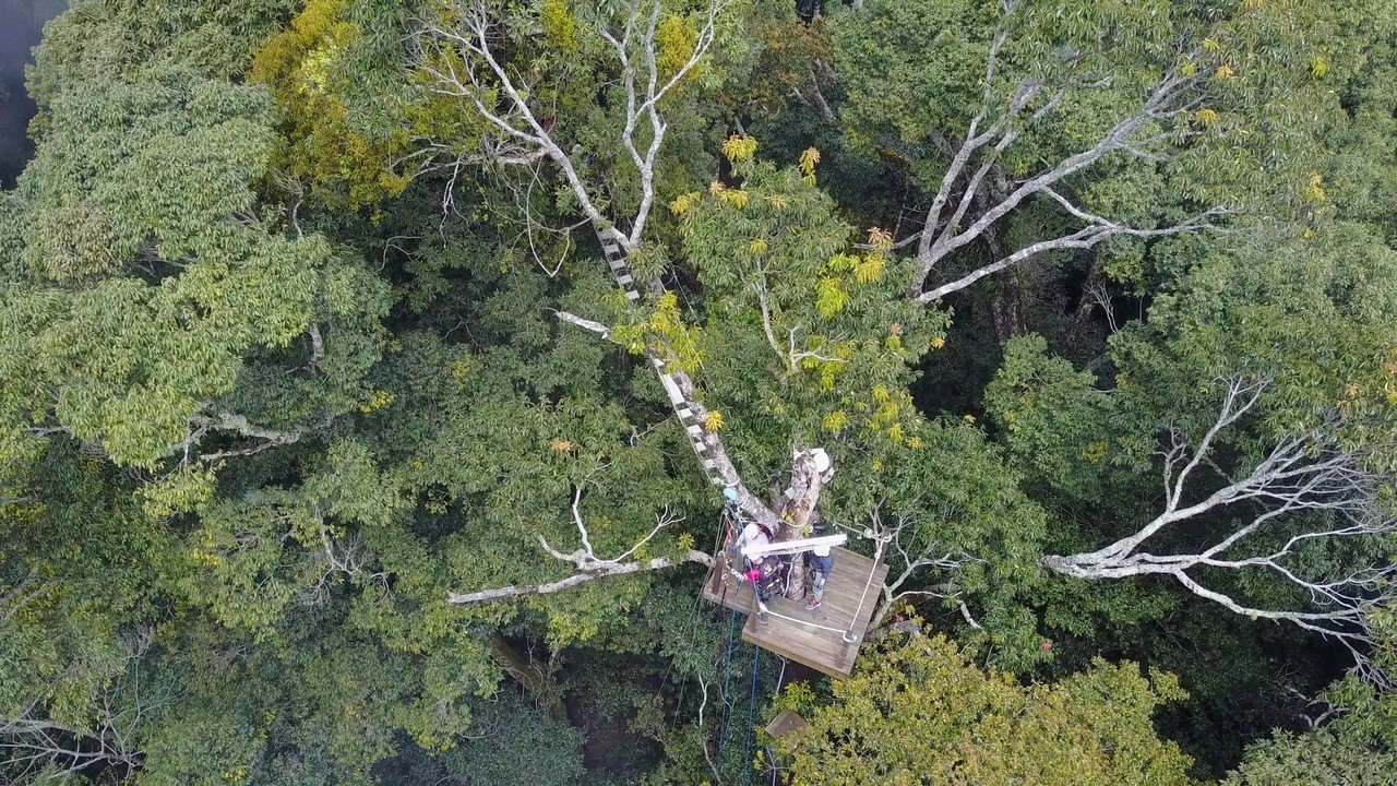 「聖稜樹冠」生態影片,雪見樹冠平台。圖/雪霸國家公園管理處提供
