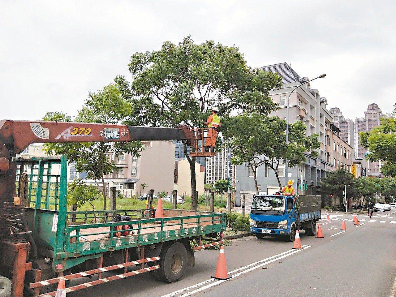 桃園市政府養工處在颱風雨季前加強公園及行道路樹修剪時,要兼顧防風災及市容美觀。 ...