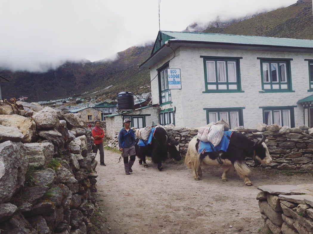 牦牛從一個村子走到另一個村子,日複一日。