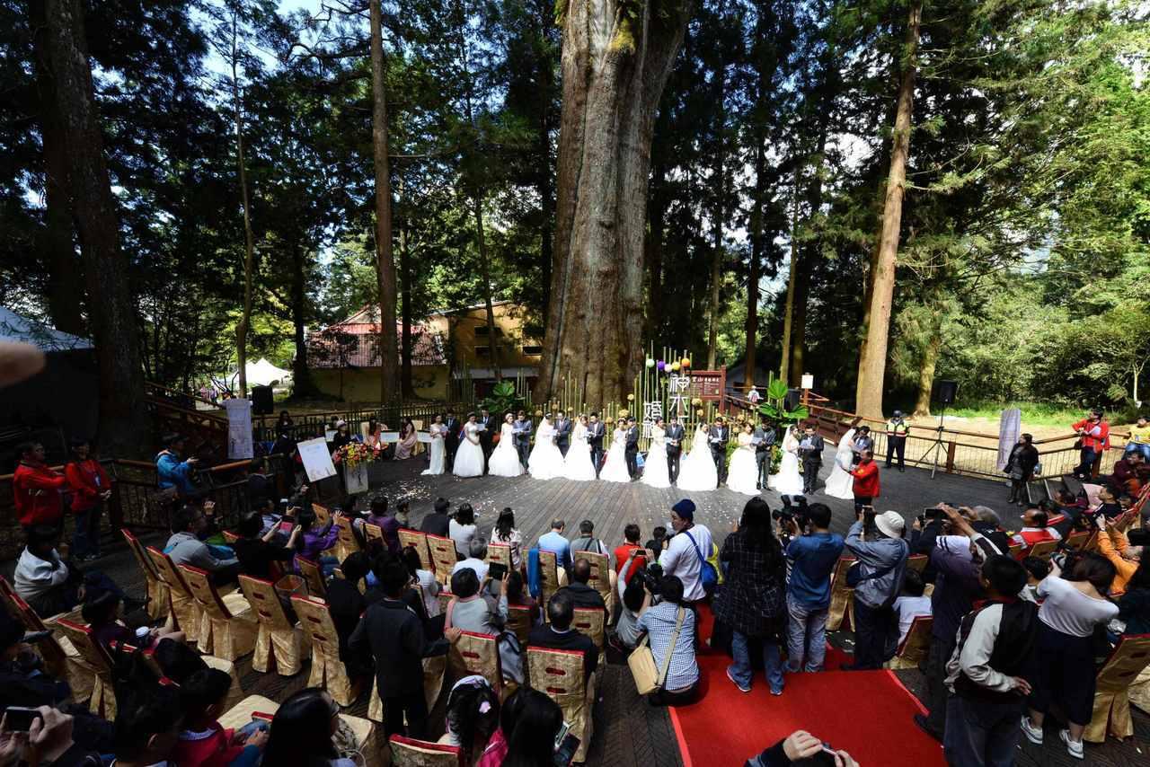 在香林神木舉辦的神木下婚禮。圖/嘉義林管處提供