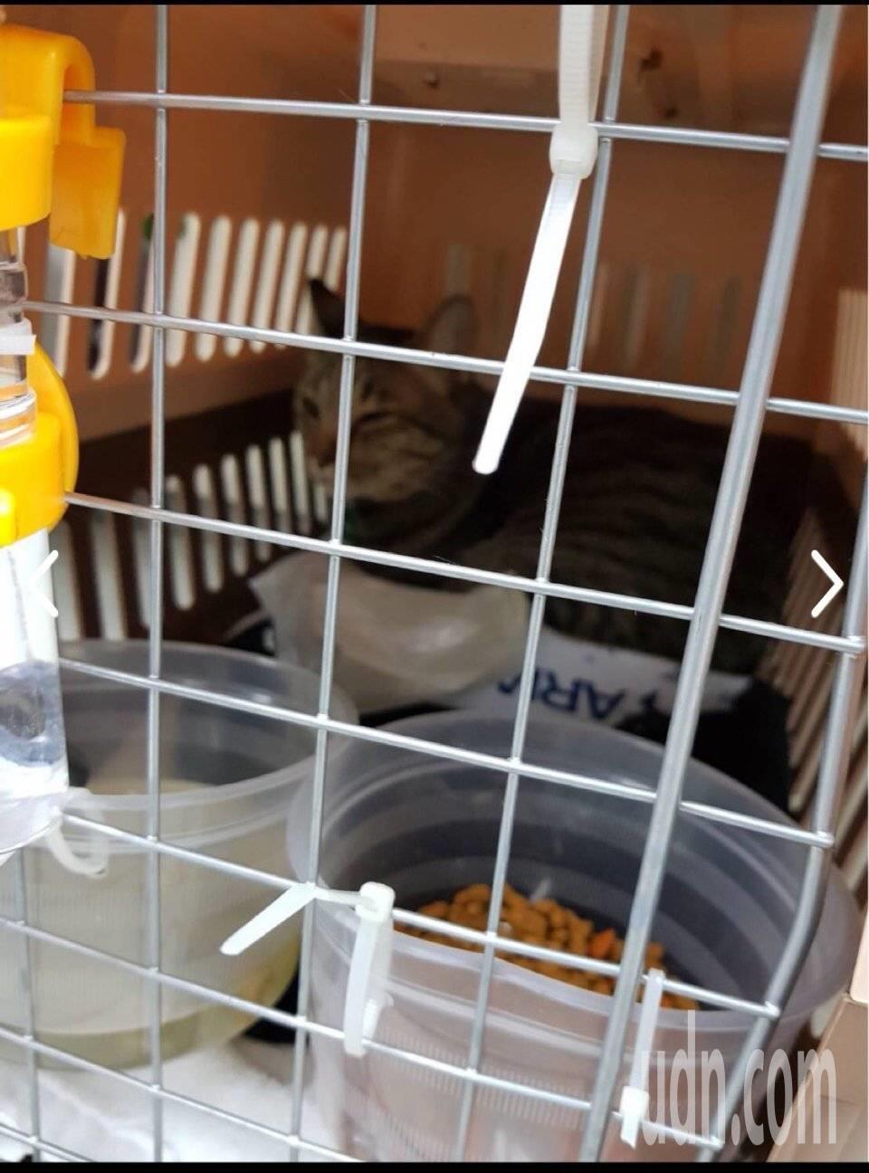 滯留在桃園機場3天的貓咪,長榮航空地勤人員自掏腰包買了貓砂,才讓貓咪順利排泄。記...