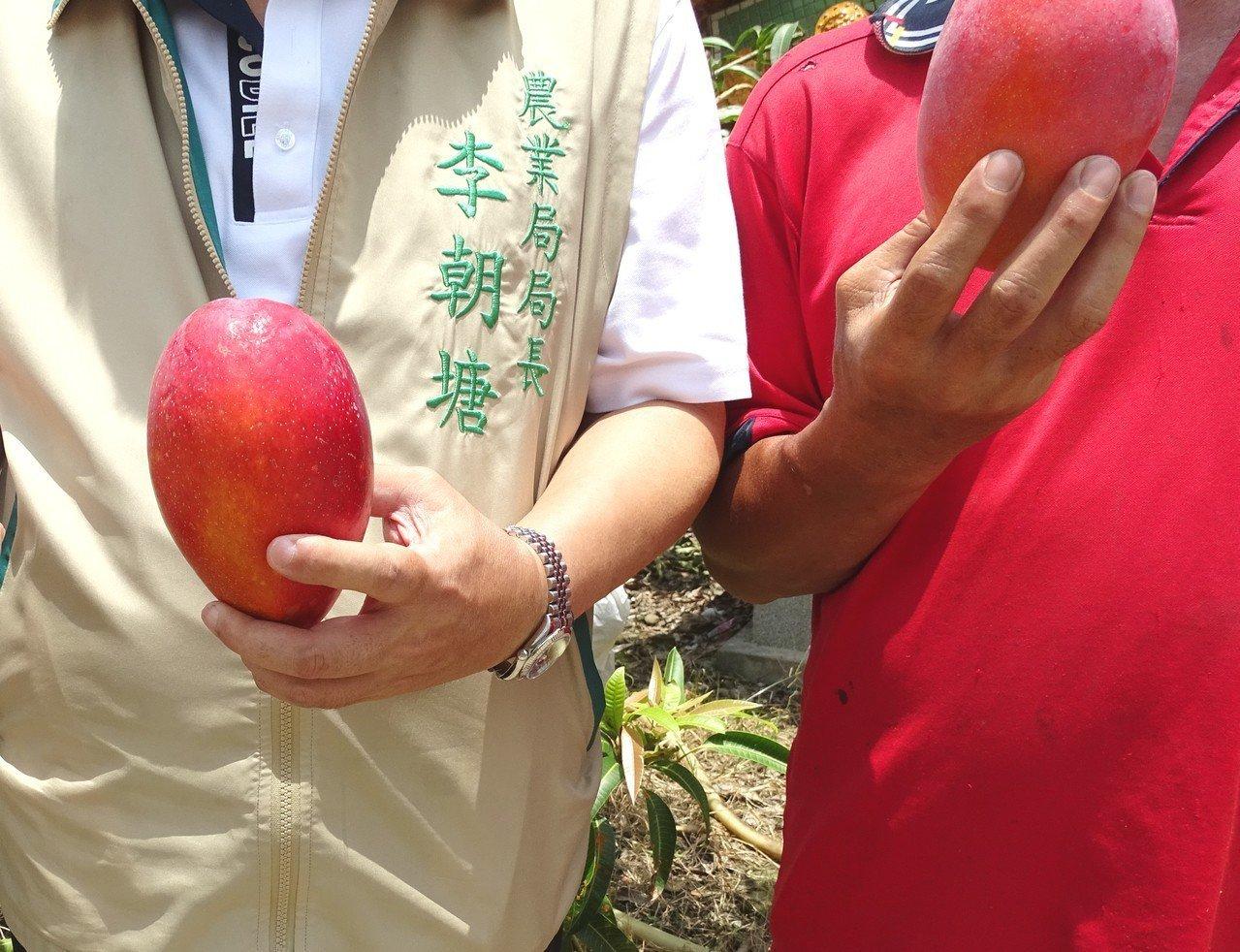 南化鏡面水庫附近丘陵地栽種出香甜誘人的愛文芒果;被譽為果中之王的「太陽果」。圖/...